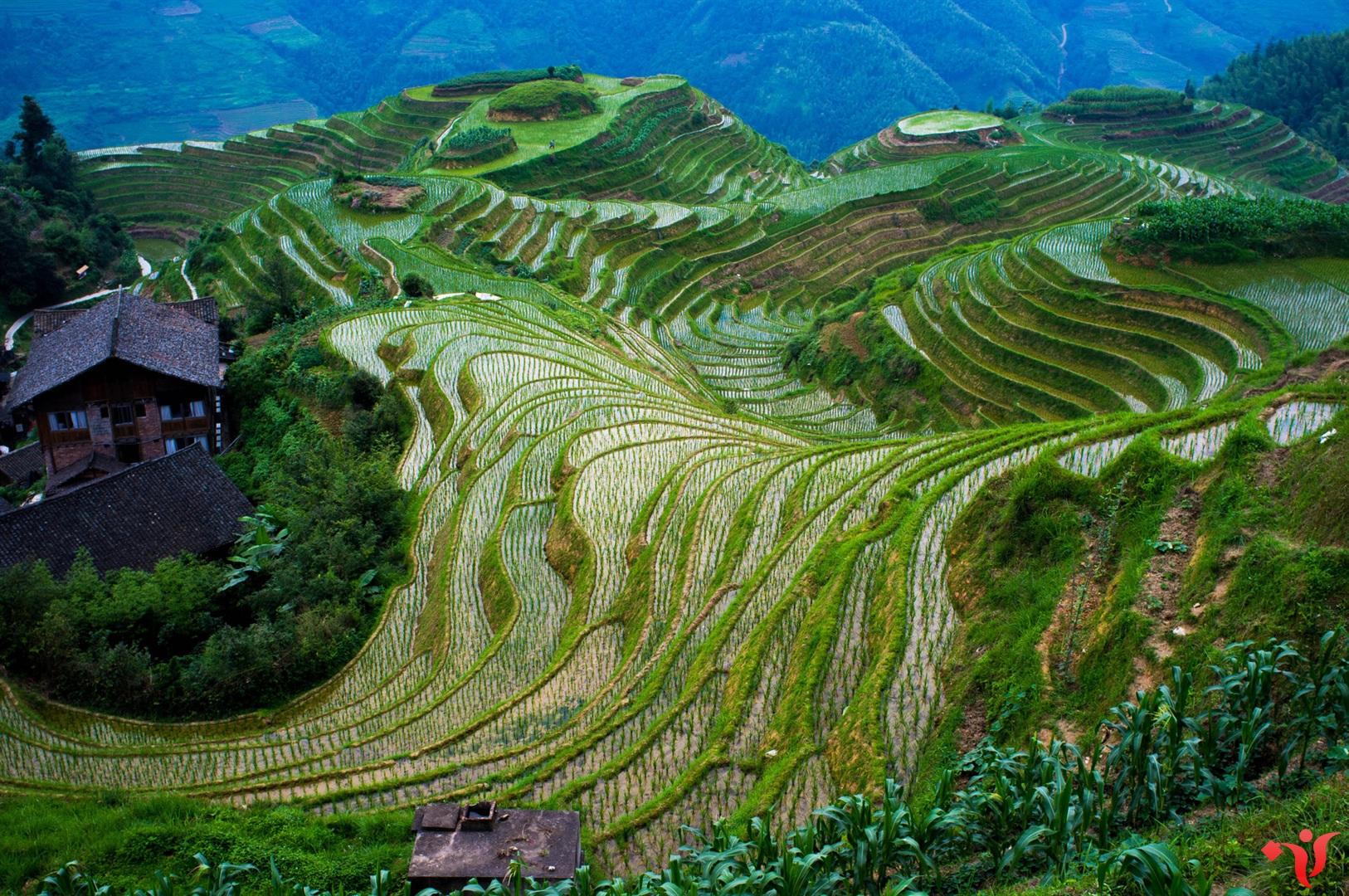 Рисовые террасы Драконьего хребта